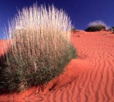 The vivid colours of the desert
