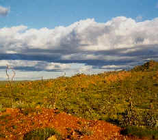 Outback ~ Northern Territory