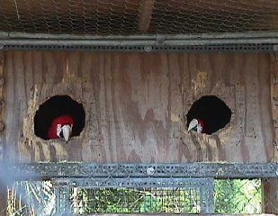 Do It Yourself Aviaries Green Winged Macaw Cages